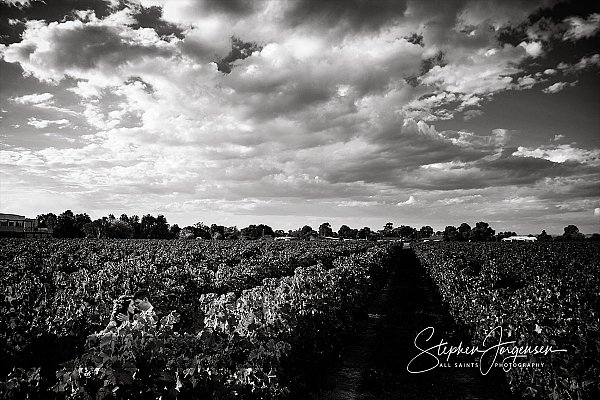 Wedding photograph in the vines at Brown Brothers Winery Milawa by Stephen Jorgensen from All Saints Photography Albury.